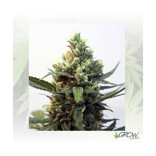 Toxic Ripper Seeds - 1 Seed