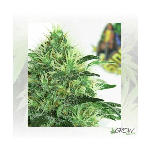 Sideral Ripper Seeds - 5 Seeds