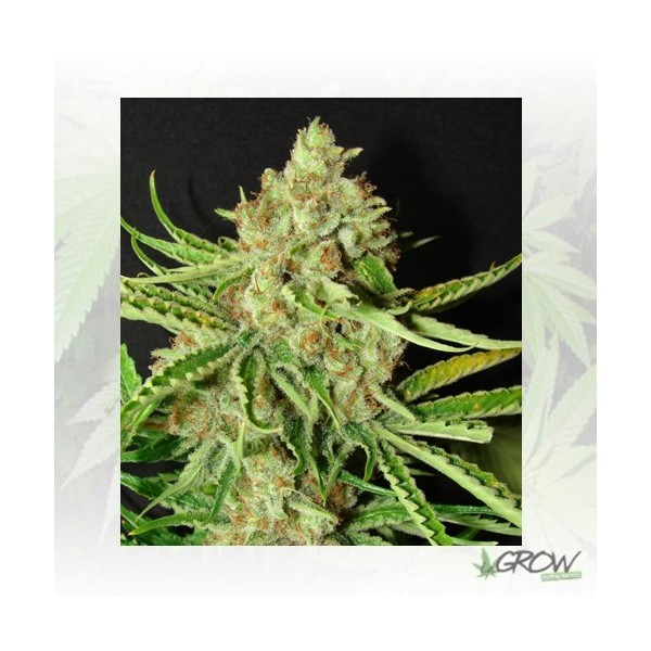 L.A. Ultra Resin Seeds - 5 Seeds